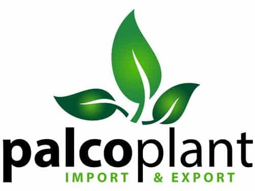 Palcoplant